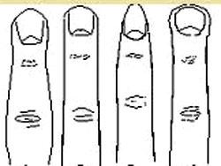 Пенис формы и размеры